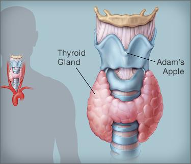 Hashimotos Thyroid